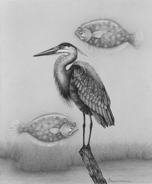 """Herman the Heron and His Flying Flounders"""