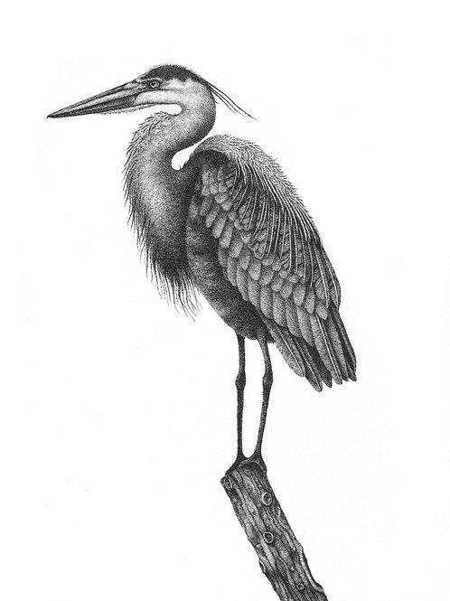 """Herman the Heron"" Archival Print"