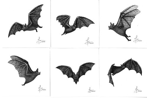 Original Mini Bat Drawings