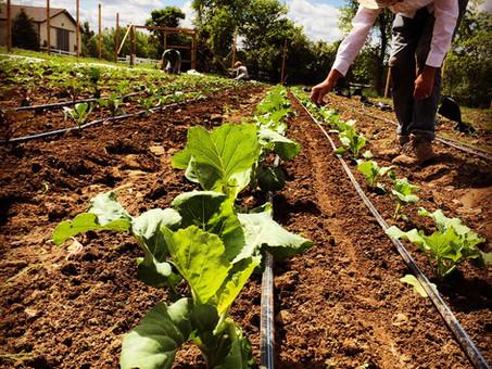 New Horticulture Classes