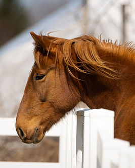 Horses_EquiCenter_3-29-2021_1315.jpg