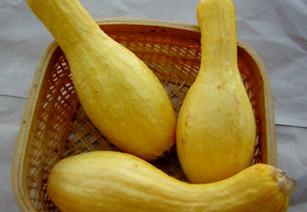 crookneck-yellow-summer-squash_480x360.j
