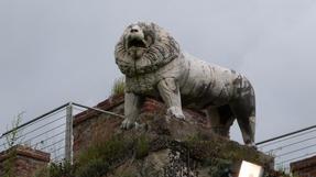 Pisai oroszlán, a kerítés tetejéről, vigyázza a Piazza dei Miracolo-t.