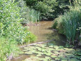 A hársas tó környéki lápvilág.