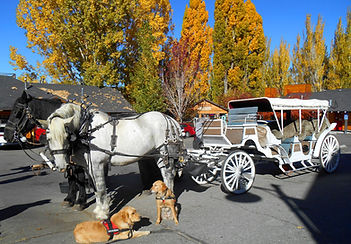 carriage2.jpg