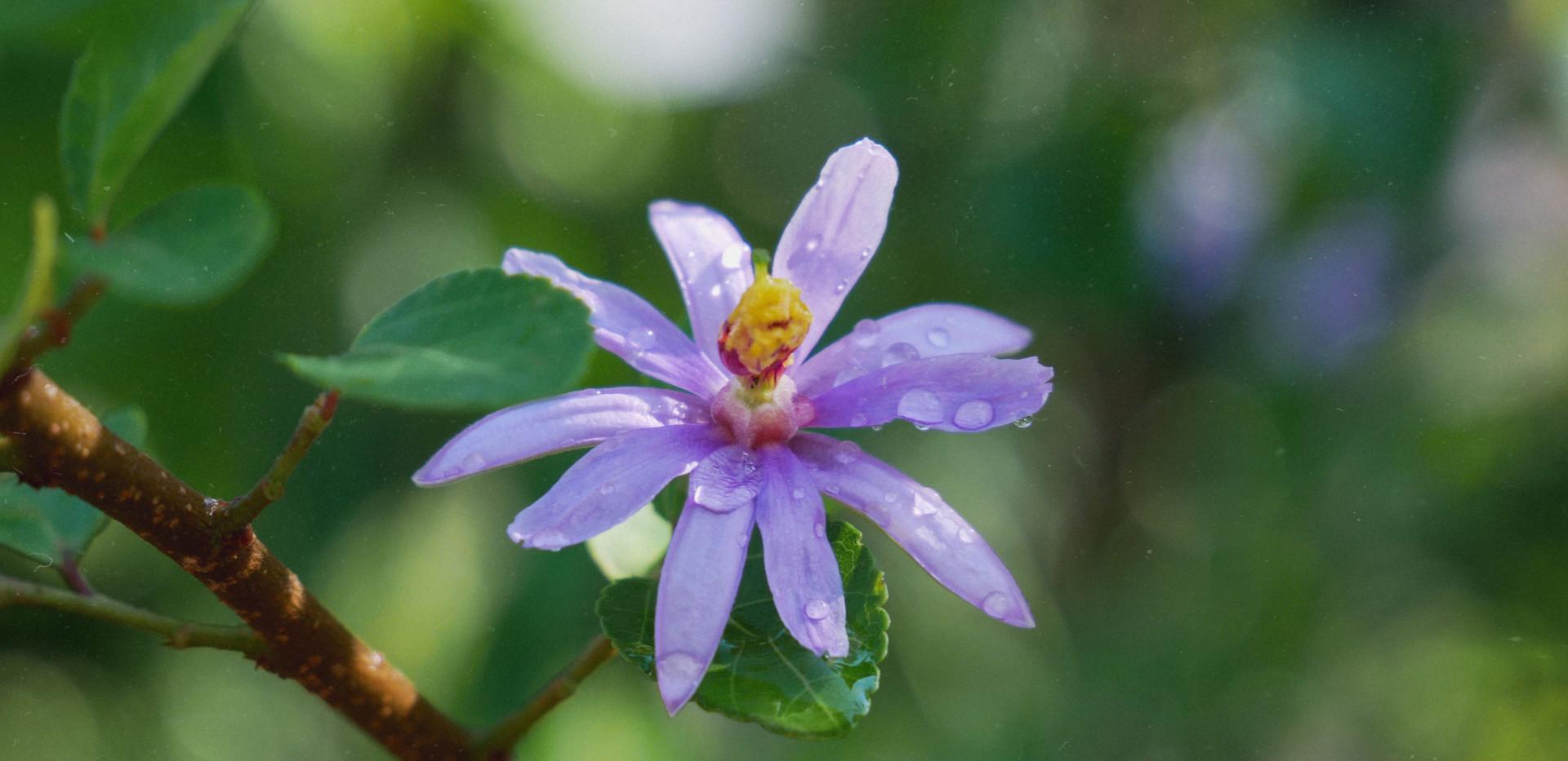 Purple flower with waterdrops