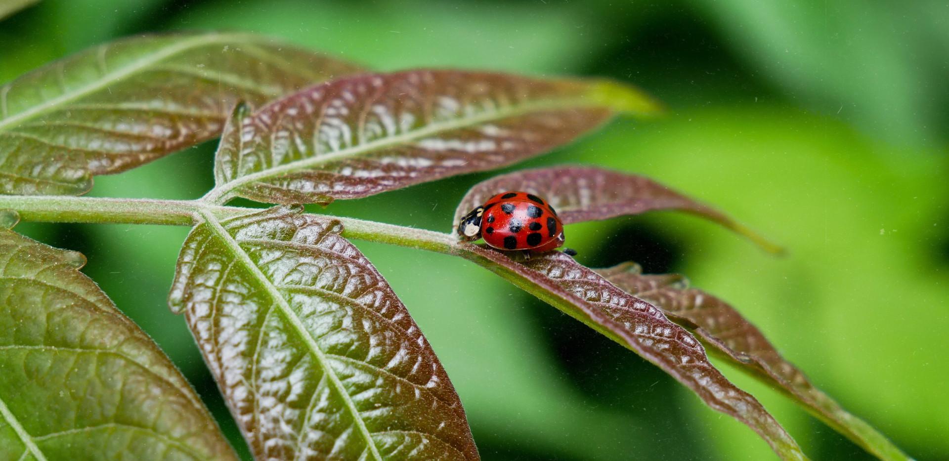 Ladybug on colorful leaf