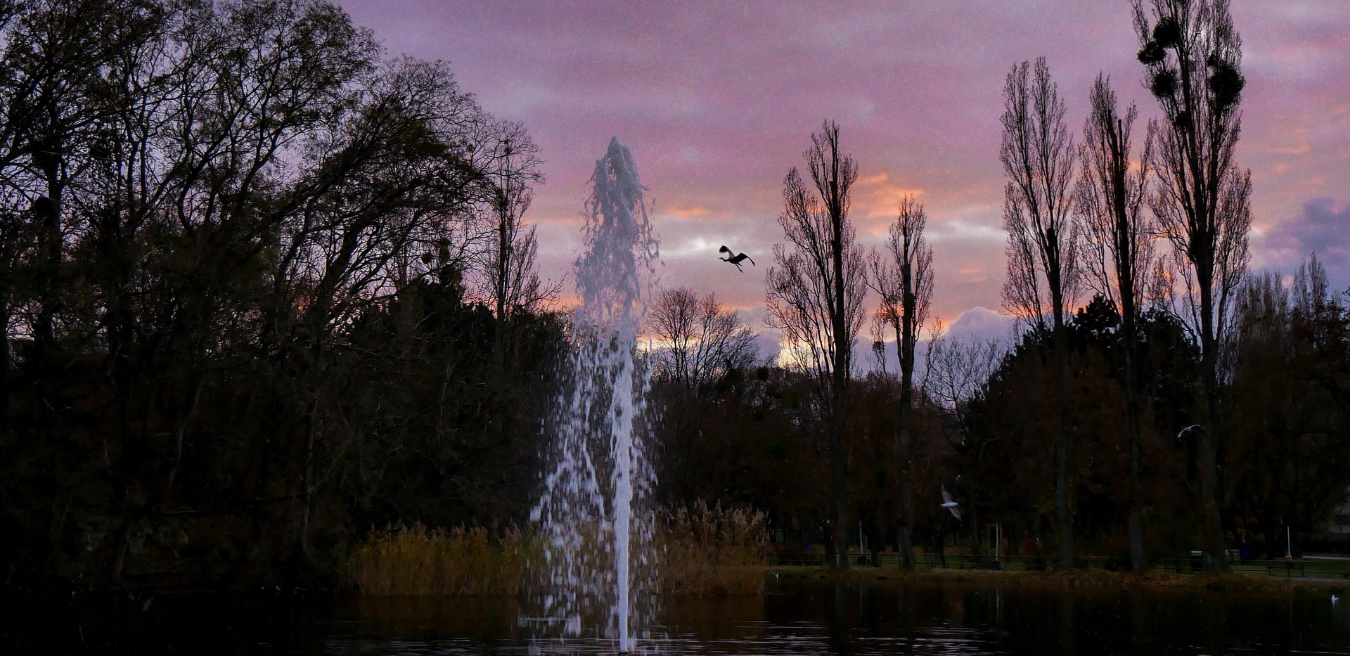 Sunset at the duck pond
