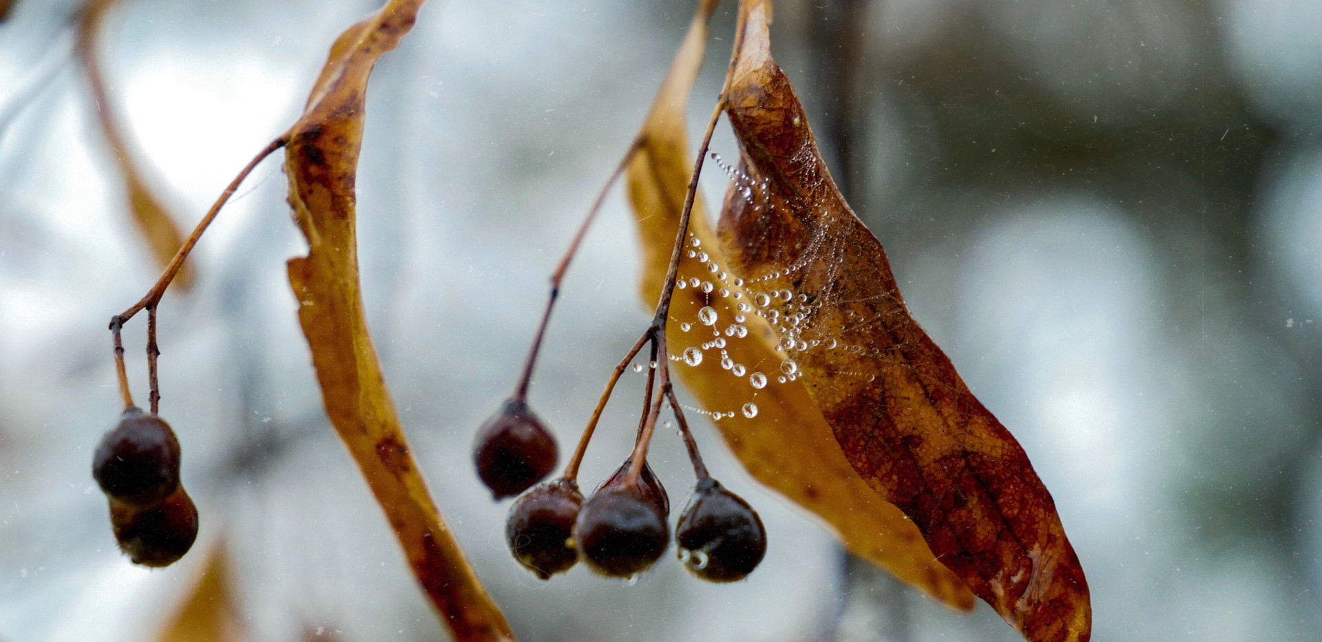 Raindrops on dried leaves
