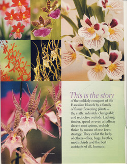 Orchids in Hawaii_Page_02.jpg