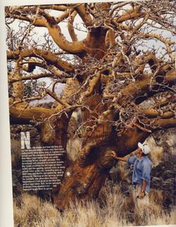 Ancient Wiliwili Trees_Page_04.jpg