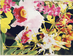 Orchids in Hawaii_Page_11.jpg