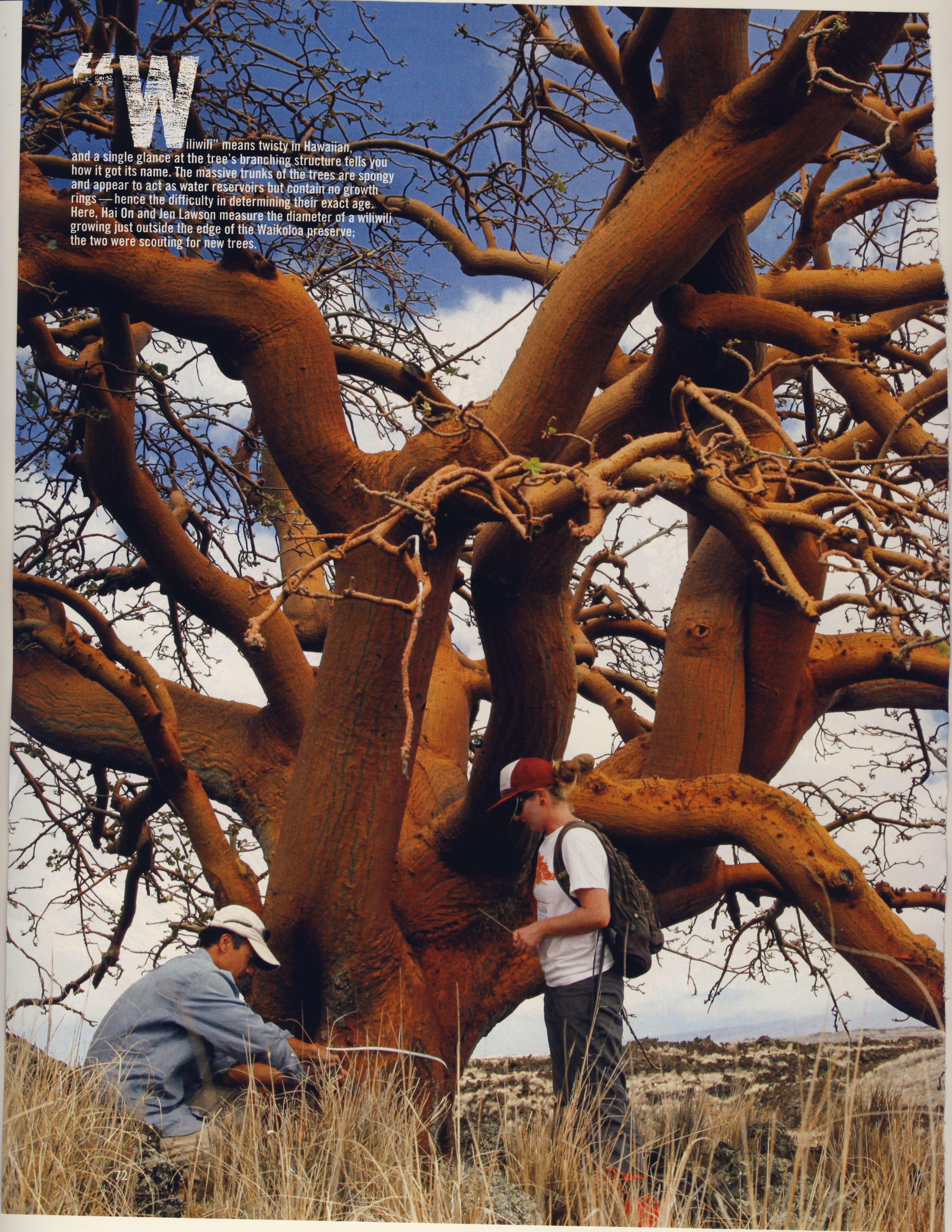 Ancient Wiliwili Trees_Page_08.jpg