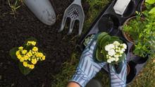 Como cuidar da sua plantação?
