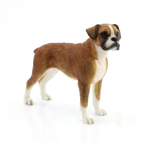 Standing Boxer Dog
