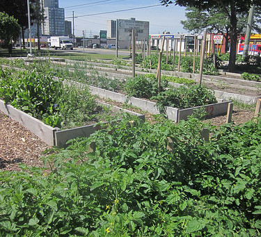 Toronto District School Board Food and Grounds Tour Review