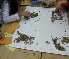 seed packing