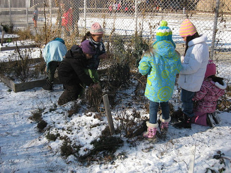 Winter garden programming & season extension