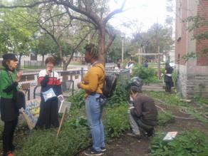 We showed, tasted & told! Urban Agriculture Week – School Garden Tour