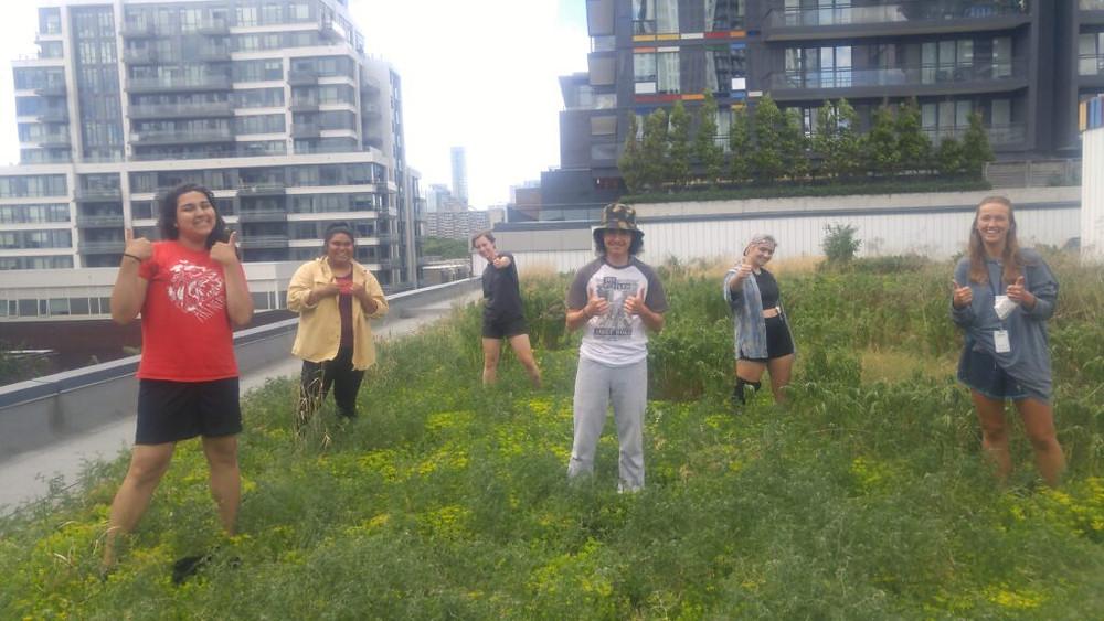 Six summer staff on green roof at CSI Regent Park