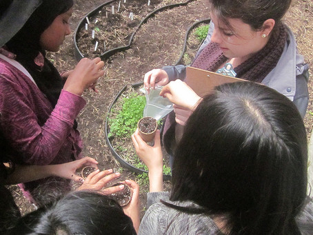 School Gardens – What's Nutrition Got To Do With It?