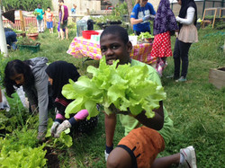Copy of Lettuce Boy Sprucecourt PS hires