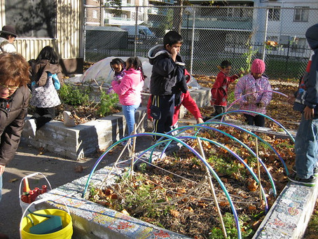 A deliciously warm autumn in the school food gardens