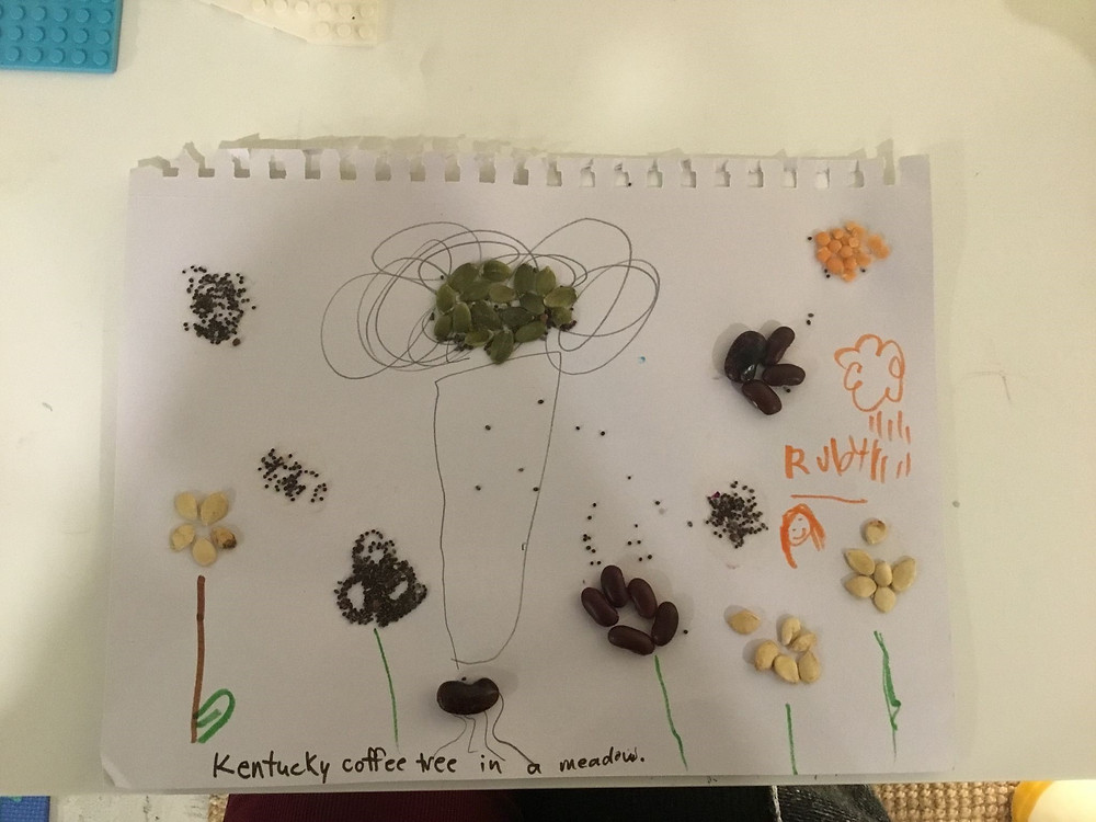 Child's art created with seed depicting a Kentucky Coffeetree