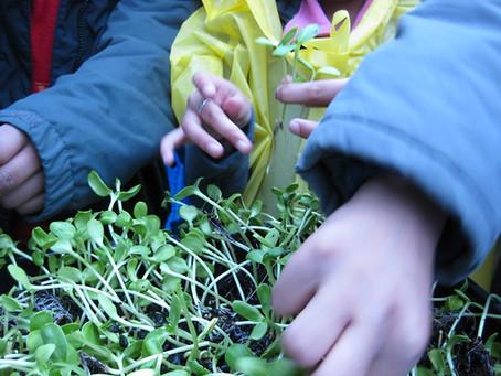 Garden and Greenhouse Educator position at GTGK