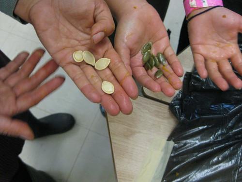 comparing pumpkin seeds