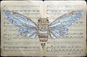 La La Cicada
