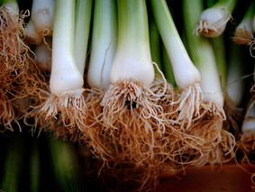 Take a peek at the many uses of the leek!
