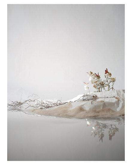 """Lori Kella: Vanishing Shoreline 16""""x20"""" prints"""