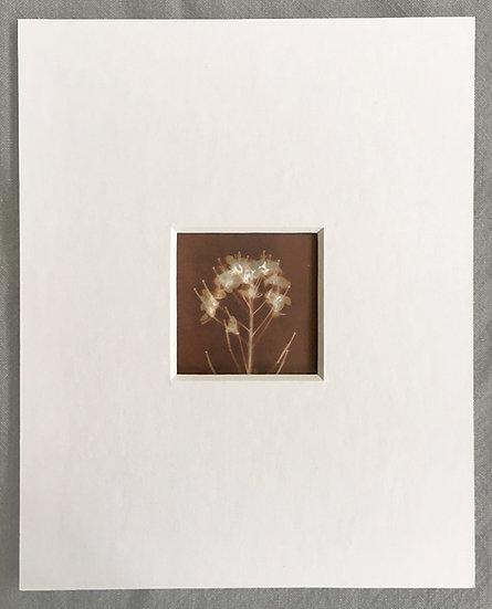 Matted Lumen Prints