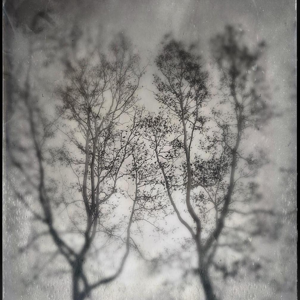Tim Lachina, Autumn's 29th dream