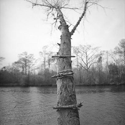 Tree Steps, Haywood Landing, White Oak River, NC
