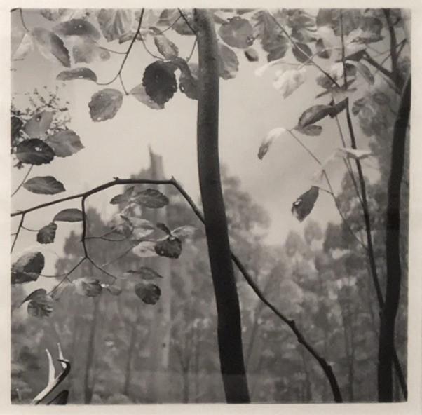 Arnold Tunstall, Diorama, Natural History Museum