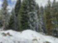 BreckLot.jpg