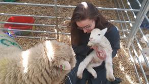 I Spent 3 Weeks Tackling 70kg Sheep