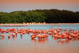 flamingi na jukatanie