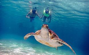 żółwie+akumal-turkusowymeksyk.jpg