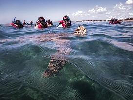 żółwie-turkusowymeksyk.jpg