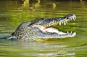 rio-lagartos-mexico-4526.jpg