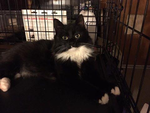 Dakota - adopted 1/2017