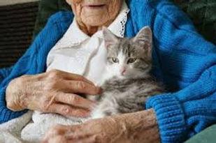 cat elder.jpg