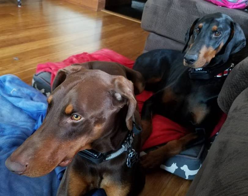 Max (R) with new brother, Jethro