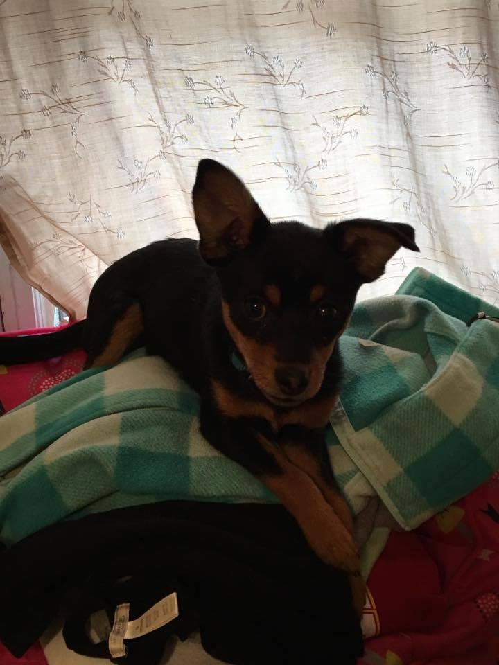 Mya - adopted 1/2017