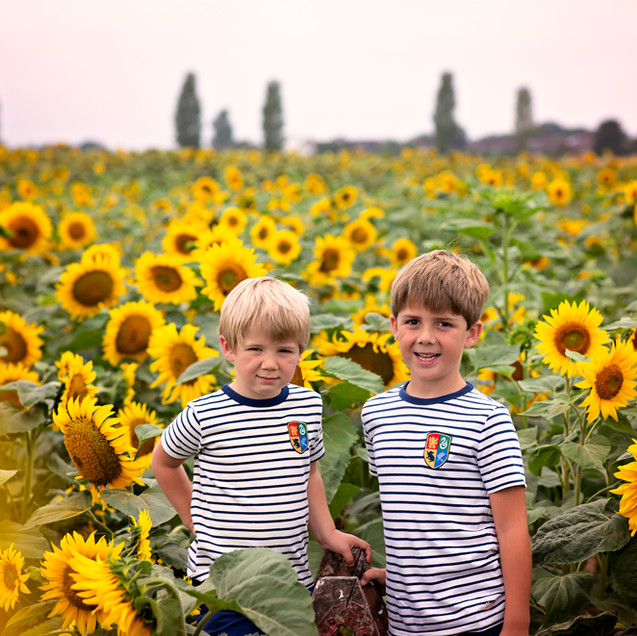 sunflowers (2 of 40).jpg