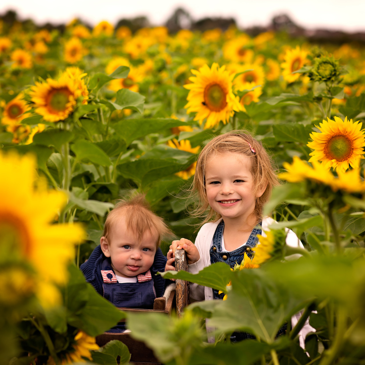SUNFLOWERS (7 of 50).jpg