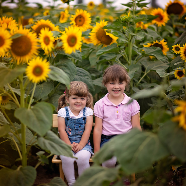 sunflowers (18 of 53).jpg